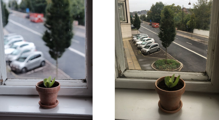 Potteplante i to forskellige vinduer